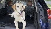 Nissan приспособил для собак еще один кроссовер - фото 11