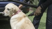 Nissan приспособил для собак еще один кроссовер - фото 15