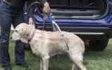 Nissan приспособил для собак еще один кроссовер - фото 16