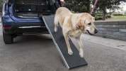 Nissan приспособил для собак еще один кроссовер - фото 21