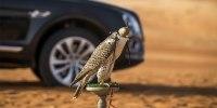 Bentley Bentayga приспособили к соколиной охоте - фото 1