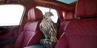 Bentley Bentayga приспособили к соколиной охоте - фото 6