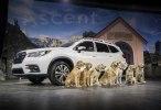 Трехрядный SUV: Subaru представила кроссовер Ascent - фото 12