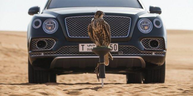 Bentley Bentayga приспособили к соколиной охоте