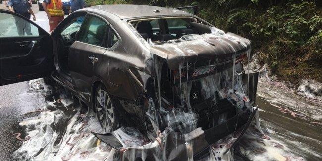 Три с половиной тонны слизистых угрей перекрыли шоссе в США