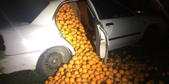 Ограбление по-испански: три компактных машины и четыре тонны апельсинов
