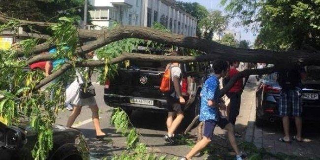 В Киеве возле Верховной Рады на машины внезапно рухнуло дерево: на Грушевского образовалась пробка