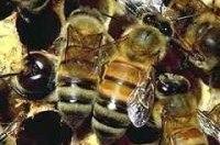 В Армении попал в аварию грузовик, перевозивший 80 ульев с пчелами