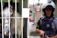 В Бразилии за порчу автомобиля «арестовали» лошадь