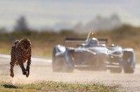 Видео: гонка электрического болида против гепарда
