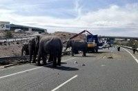 В Испании перекрыли автомагистраль ради спасения слонов