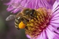 Ford наймет на работу 360 000 пчел
