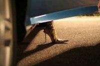 19 июля на автодроме Чайка прошли женские автосоревнования Мисс ФОРСАЖ 2007