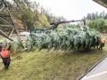 «Мерседес» доставил королеве Великобритании рождественскую елку - фото 7