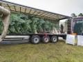 «Мерседес» доставил королеве Великобритании рождественскую елку - фото 8