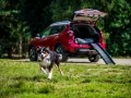 Nissan X-Trail приспособили для перевозки собак - фото 2