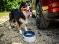 Nissan X-Trail приспособили для перевозки собак - фото 3