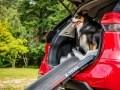 Nissan X-Trail приспособили для перевозки собак - фото 9