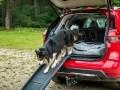 Nissan X-Trail приспособили для перевозки собак - фото 11