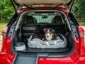 Nissan X-Trail приспособили для перевозки собак - фото 12