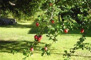 В Точно опьяненный киевлянин влетел в автомобиле на яблоню