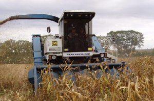 Комбайнер насмерть смолотил вора, кравшего кукурузу