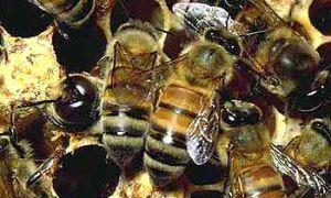В Армении попал в трагедию грузовой автомобиль, возивший 80 ульев с пчелами