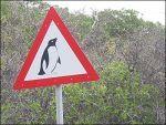 На английских проселках 70% автодорожных символов назвали не нужными