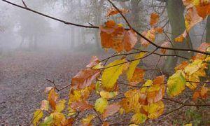 Специалисты предсказывают детройтской тройке трудную осень