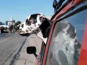 Форд объявлен самым близким другом собак