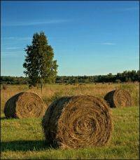 В Германии устроено изготовление биодизеля из травы