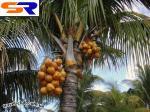 В Малайзии будут двигаться на пальмовом масле