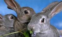 В Венгрии перемещение по автотрассе обездвиживали 5000 зайчиков