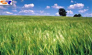 Изготовление биоэтанола угрожает природоохранной катастрофой
