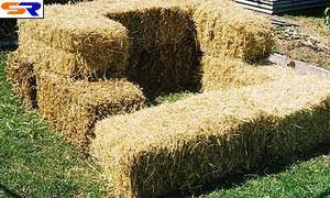 КНР перейдет на биотопливо из травы