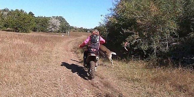 В США мотоциклиста сбил олень