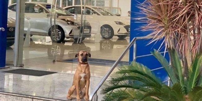 В автосалоне Hyundai появился четвероногий консультант