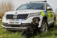 Кроссовер Skoda Kodiaq отправили возить полицейских собак