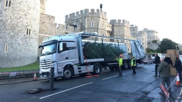«Мерседес» доставил королеве Великобритании рождественскую елку